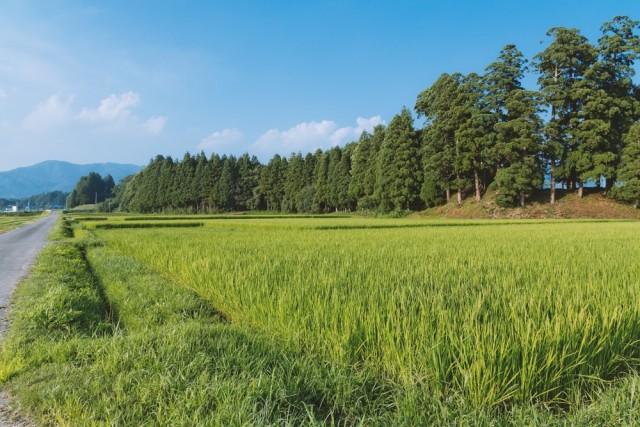 山林、牧場、原野などの評価方法...