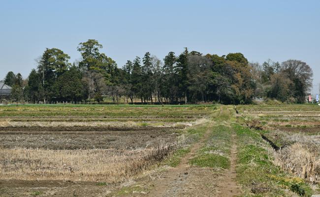 農地・山林・牧場・原野などの評価方法はどのようになっている?【相続の評価】